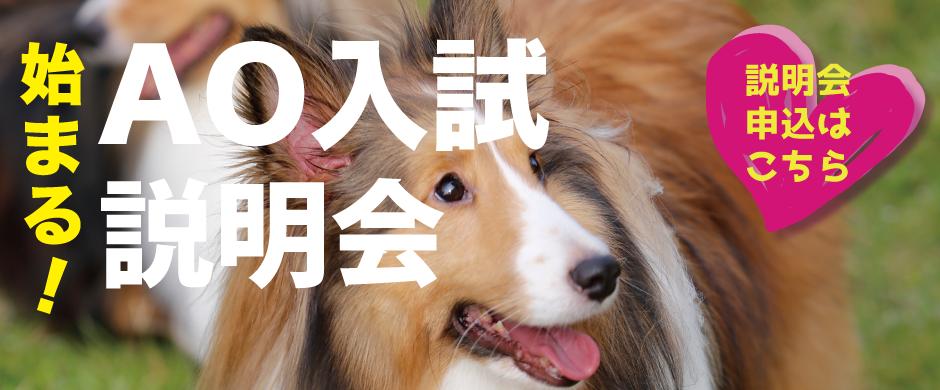 AOエントリーは6/1(金)スタート!!