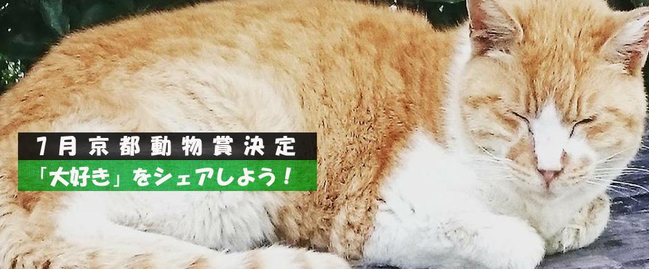 """7月 """"京都動物賞"""" 決定しました! ~「大好き」をシェアしよう!キャンペーン~"""