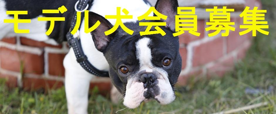 モデル犬会員募集中!!