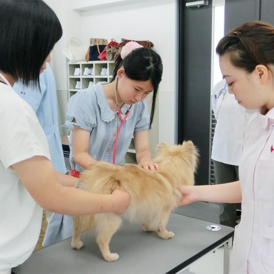 トータル動物看護体験