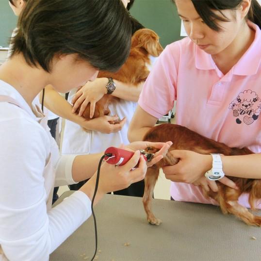 動物看護&トリミング体験