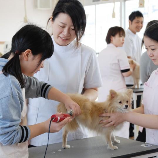 動物看護体験&トリミング体験