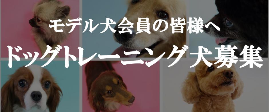 モデル犬会員の皆様へ ドッグトレーニング犬募集!!