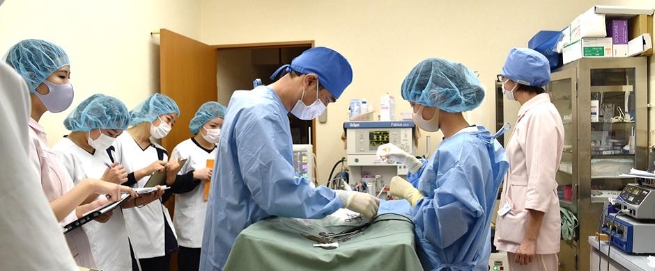 手術実習を行いました